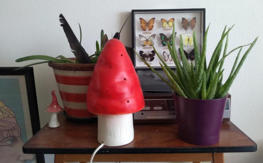 Aloë Vera plant in een paarse pot op een tafeltje met decoratie.