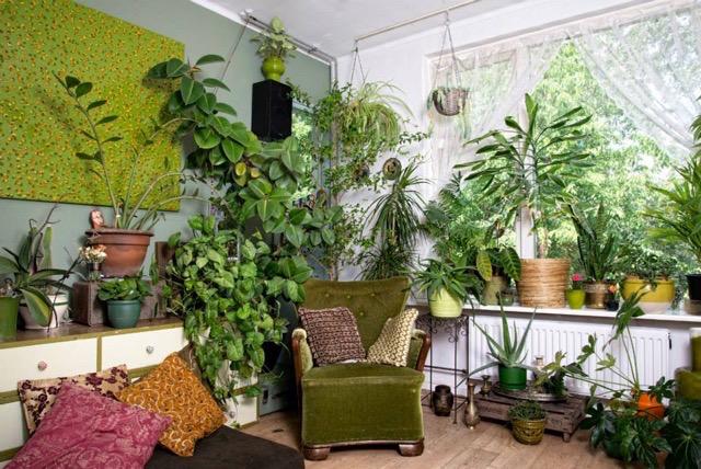 Heel veel planten in een woonkamer.